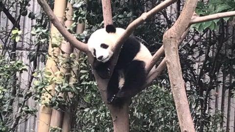 Only in Chengdu