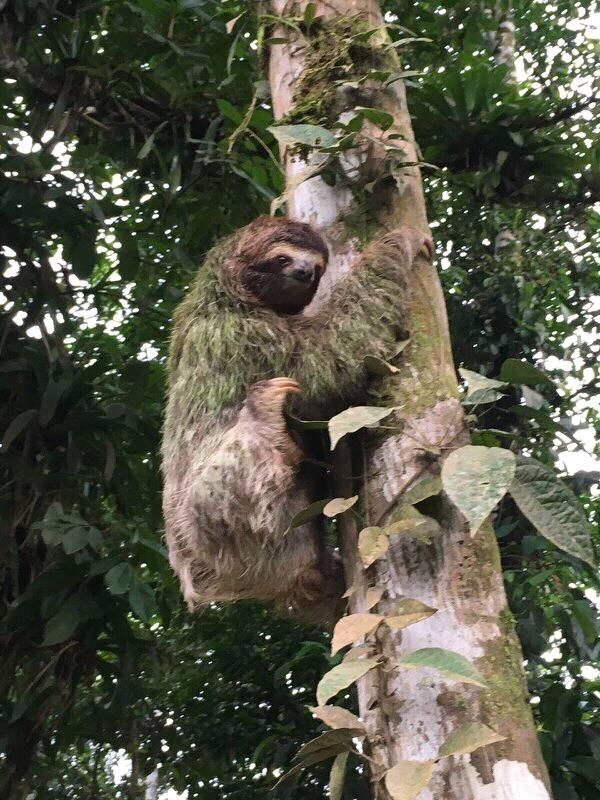 Rancho Quemado Sloth